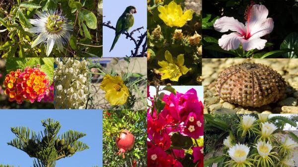 Флора и фауна Сардинии