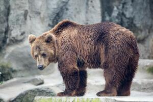 Что хотят увидеть и купить иностранные туристы в России?