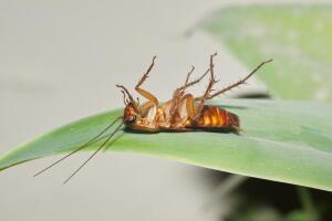 Много лет тараканы делили с человеком и кров, и стол. А тут вдруг стали исчезать. Почему же они от нас ушли?