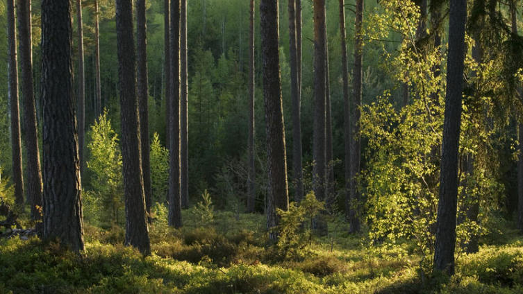 Тайна танцующего леса. Бывают ли чудеса в реальной жизни?
