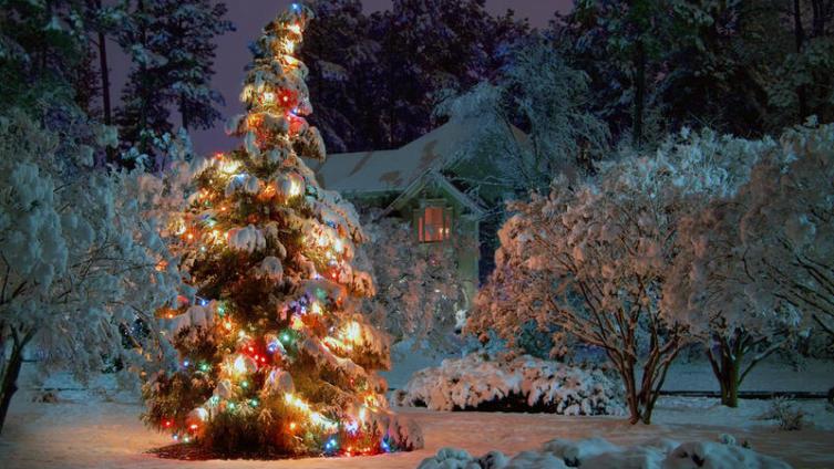 Как использовать новогоднюю елку?