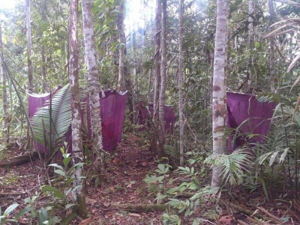Курс выживания: наш гамачный лагерь в глубине джунглей