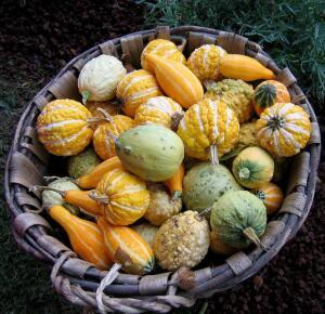 Чем интересен дикий арбуз и другие растения Калахари и Намиб?