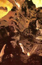 Летучие мыши в пещере.