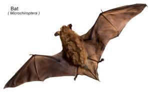 Как и зачем звери стали летать?
