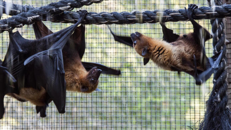 Как летучие мыши «видят» ушами?