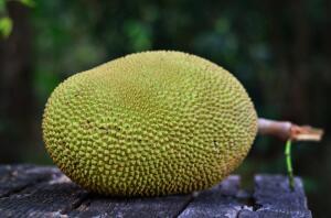 Что известно о тайской кухне? Замечательный гигант джекфрут