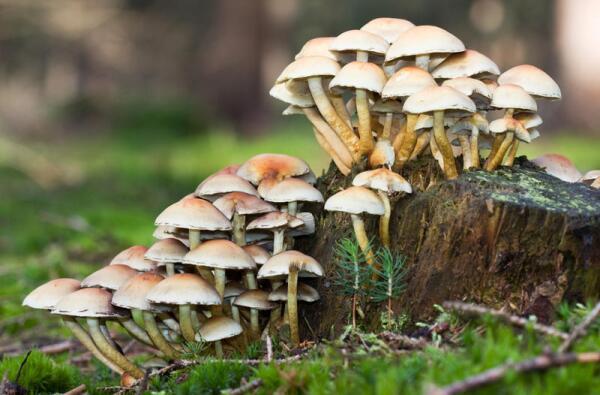 Как вьетнамцы грибы собирали? Студенческие байки