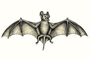 «Ведьма или ангел, Птица или зверь?» Образ летучей мыши в мифологии и культуре