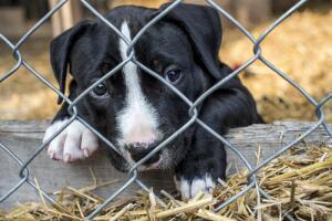 Нужна ли собаке клетка?