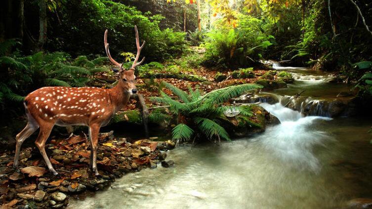 Вернись, лесной олень… Если верить, сказка оживет?