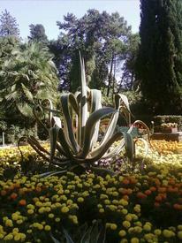 Растения в Дендрарии