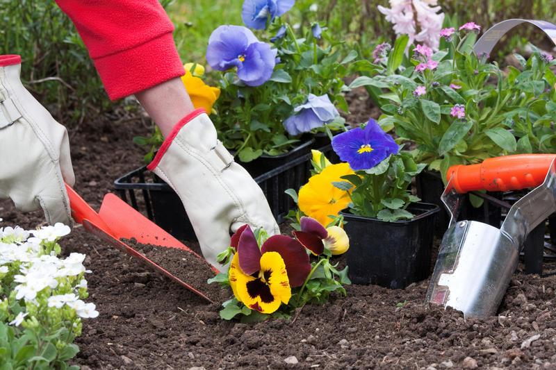 Фото как сожать цветы