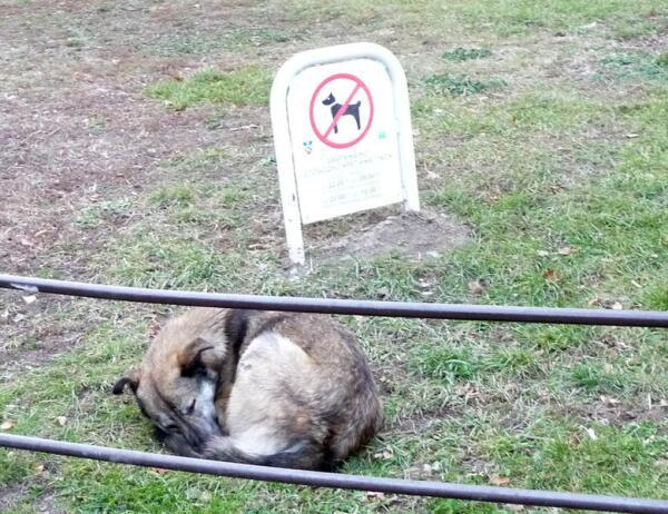 Белград. Запреты