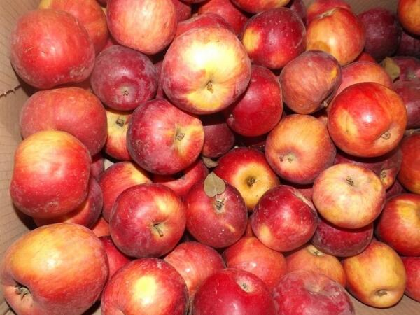 Ароматные яблочки так и просятся на стол
