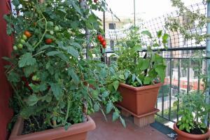 Как сделать мини-огородик на подоконнике?