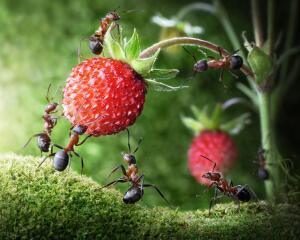 Как бороться с муравьями в саду и огороде?