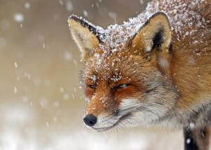 Способны ли животные хитрить и врать?