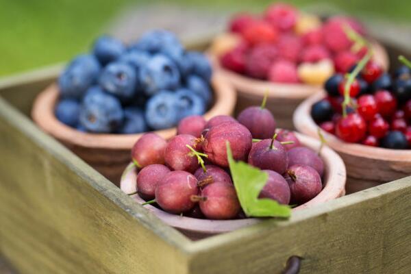 Выгодно ли выращивание ягодников нетрадиционным способом?