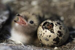 Что известно о птичьих яйцах?