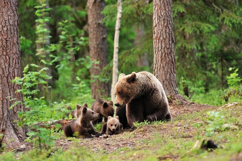 Дикие звери весной в лесу картинки