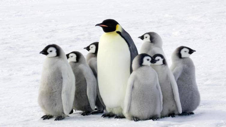 Живут ли пингвины в Африке?