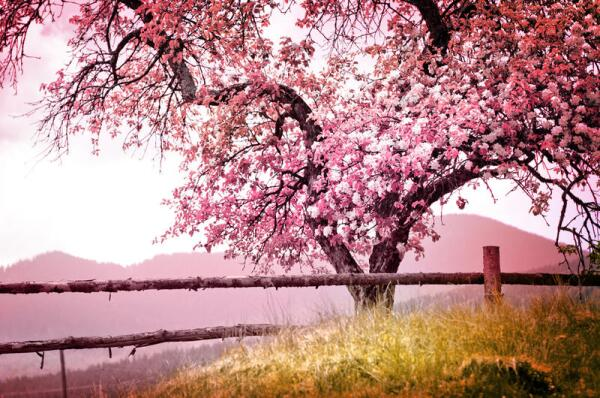 Какие заблуждения связаны с весной?