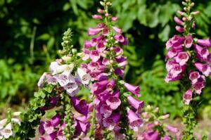 Как защититься от аллергии на пыльцу?