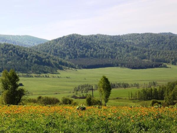 Алтайская долина с цветущими жарками