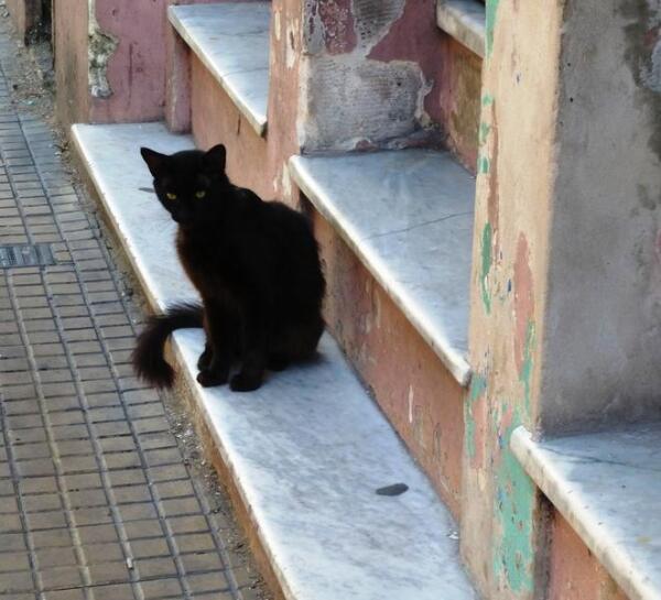 Первый житель Буэнос-Айреса, встретивший нас около гостиницы