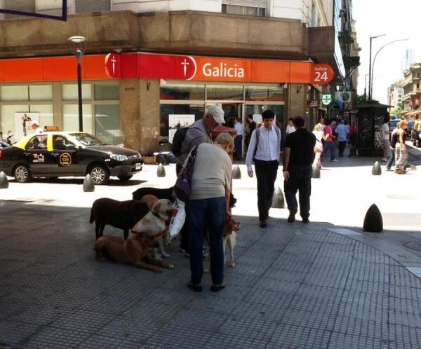 Говорят, что Аргентина - это страна собак