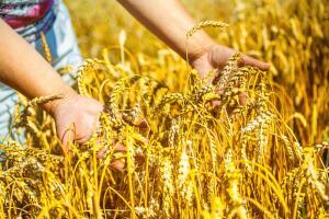 Какое заблуждение связано с хлебным квасом?
