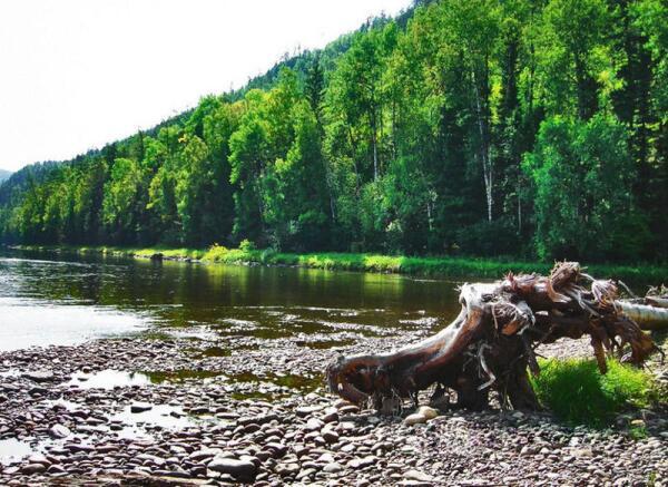 Река Бирюса, левый приток Ангары