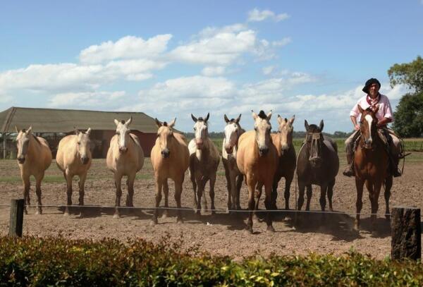 Лошади готовы к встрече с седоками