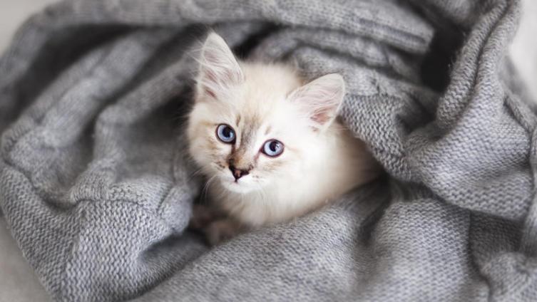 Чем завершилась карьера кота-шпиона?