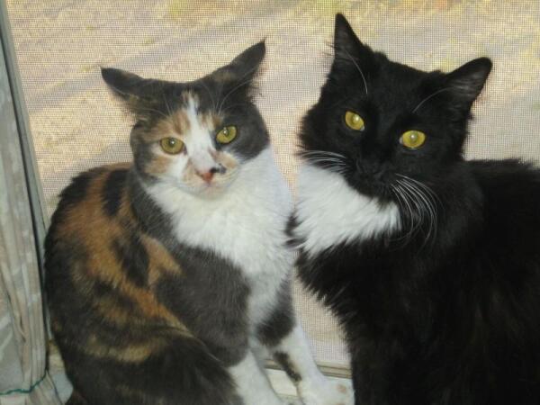 Наши коты Соня и Такс