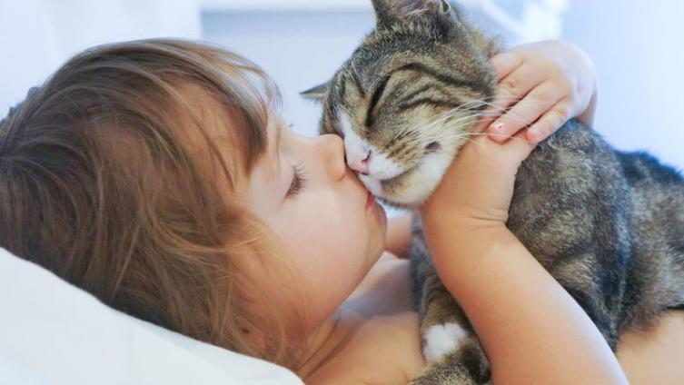 Почему кошачьи укусы опаснее собачьих?