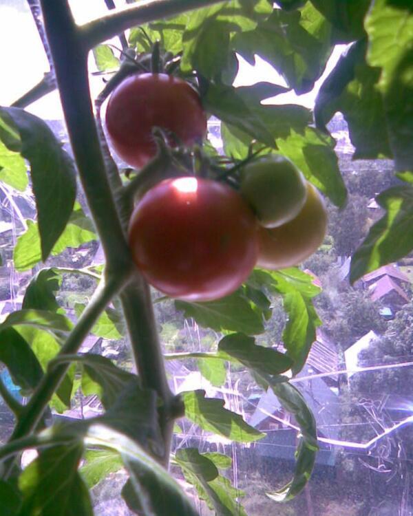 Вот и первый урожай!