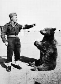Рядовой польской армии - медведь Войтек.