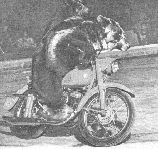 Медведи в Московском цирке.
