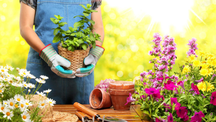 Как общаются растения?