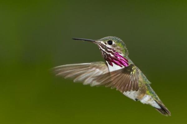 Могут ли птицы вырабатывать электричество?