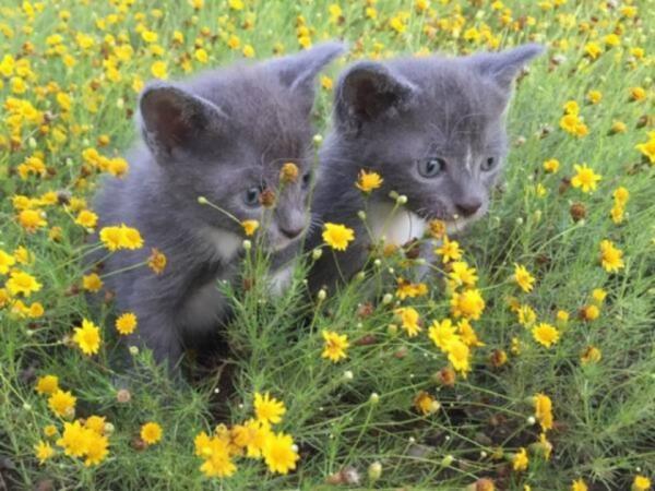 Покупка домашних питомцев в США. Как мы нашли наших новых котят?