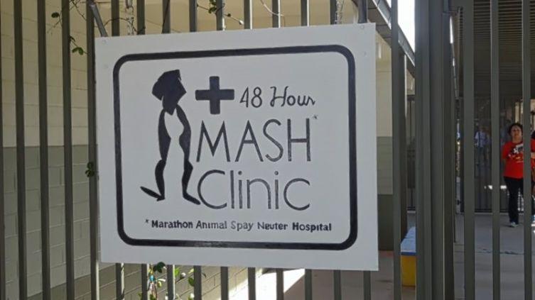 Временный госпиталь для животных