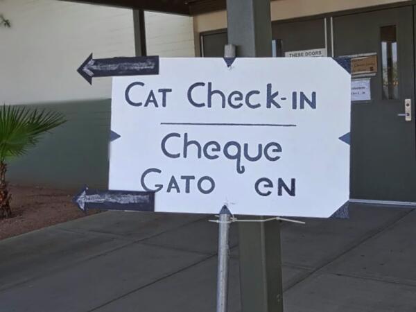 Регистрация котов и кошек