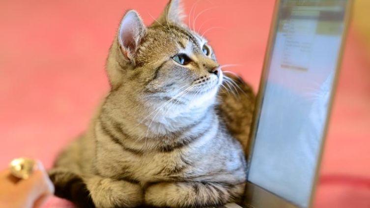Стерилизация кошки. Как ухаживать за ней после операции?