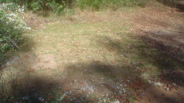 Оживающая трава дёрнов на новом месте заметно позеленела