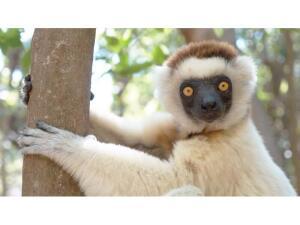 Где находится Седьмой континент? 10 причин поехать на Мадагаскар… или не делать этого. Часть 1