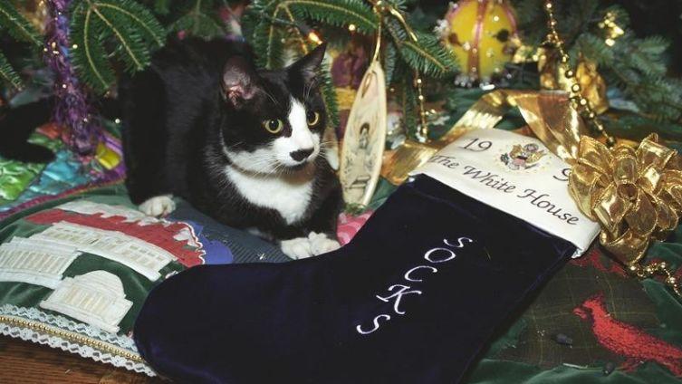 Как сделать празднование Нового года безопасным для домашних животных?