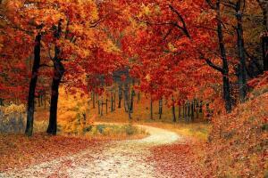 Осенний вернисаж. Часть 1. Как появилось название выставки?